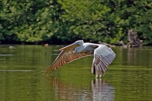 pelican-5601713_960_720.jpg