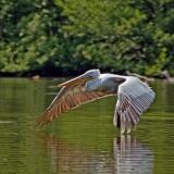 pelican-5601713_960_720