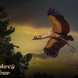 bird-5610948_960_720