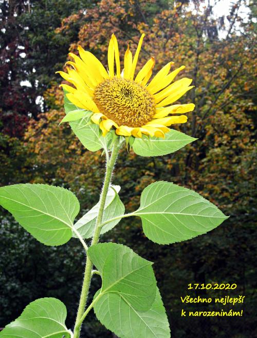 IMG_9105-crop.jpg