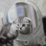 the-kitten-looks-in-the-mirror-5491982_960_720