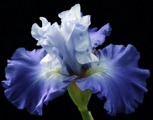 blossom-5356482_960_720.jpg