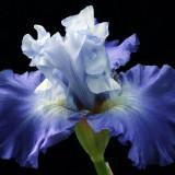 blossom-5356482_960_720