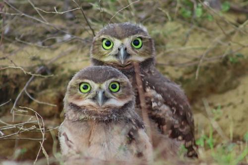 owls-5674189_960_720.jpg