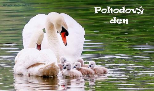 swans-5159767_960_720.jpg