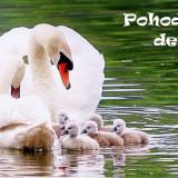 swans-5159767_960_720