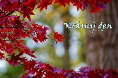 leaves-5678422_960_720.jpg