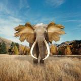 elephant-5731498_960_720