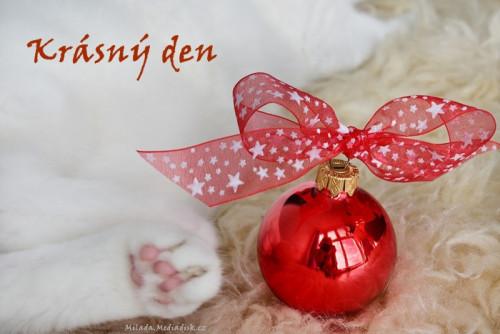 christmas-5726148_960_720.jpg