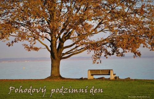 tree-5739206_960_720.jpg