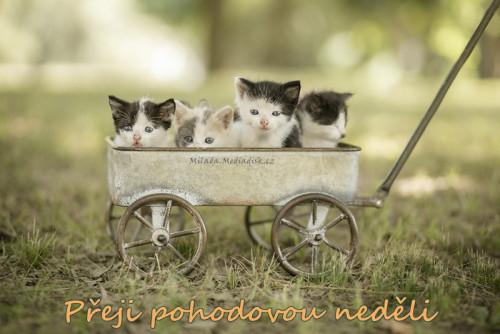 kittens-5731399_960_720.jpg