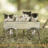kittens-5731399_960_720