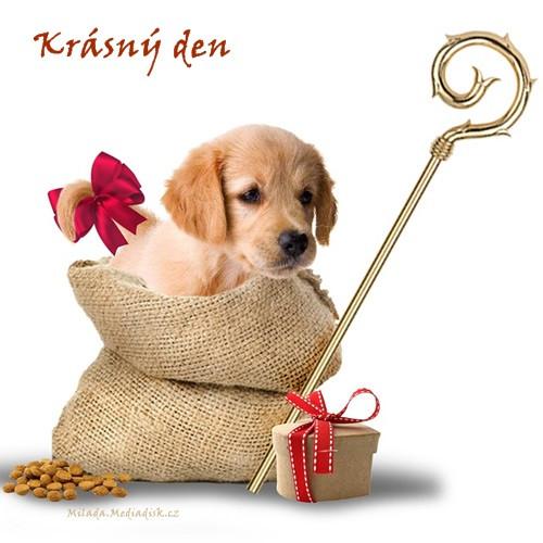 puppy-5741734_960_720.jpg