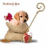 puppy-5741734_960_720
