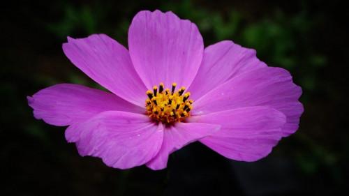 flower-5618124_960_720.jpg
