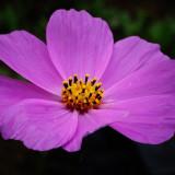 flower-5618124_960_720