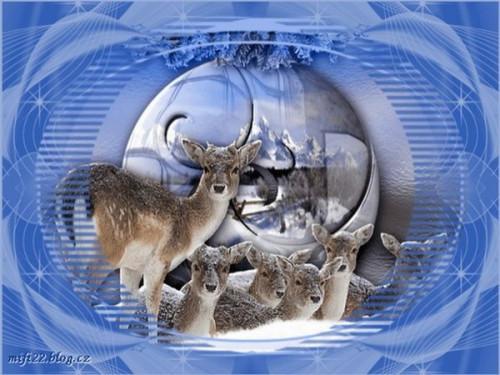Zimni-obrazky-74.jpg