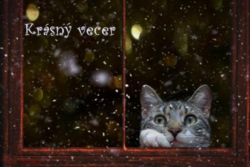 cat-5854076_960_720.jpg