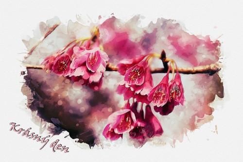 cherry-blossom-5829629_960_720.jpg