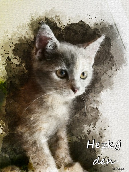 cat-5806669_960_720.jpg