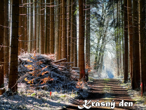 forest-path-5861905_960_720.jpg