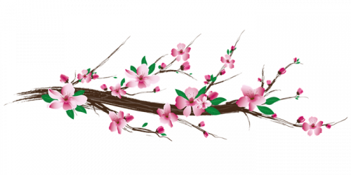 cherry-blossom-5781475_960_720.png