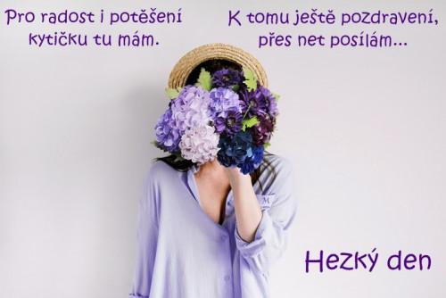 hydrangea-5076212_960_720.jpg