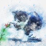cat-2555768_960_720