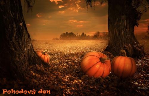 pumpkins-5675502_960_720.jpg