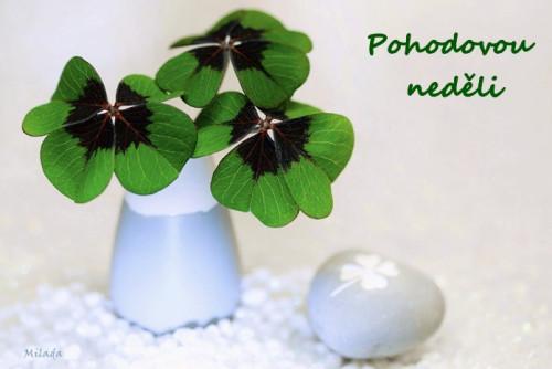 four-leaf-clover-5862310_960_720.jpg