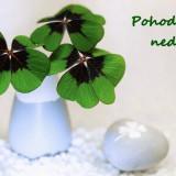 four-leaf-clover-5862310_960_720