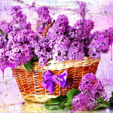 flowers-2478947_960_720