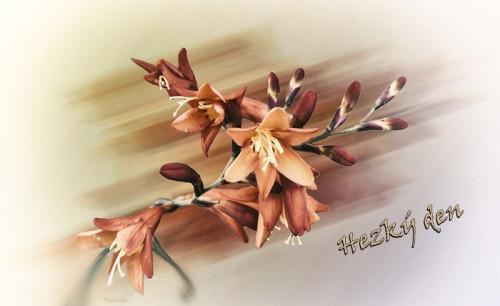 flowers-5893602_960_720.jpg