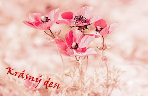 pink-5585152_960_720.jpg