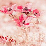 pink-5585152_960_720