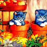 kittens-5846122_960_720