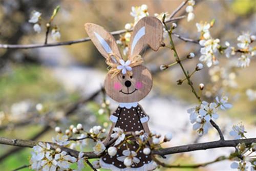 hare-4970976_960_720.jpg