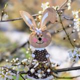 hare-4970976_960_720