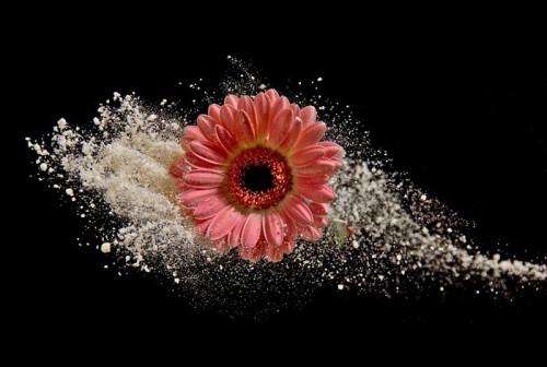 daisy-5940873_960_720.jpg
