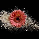 daisy-5940873_960_720