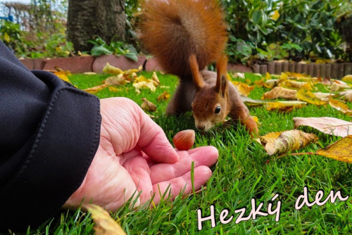 squirrel-5924280_960_720.jpg