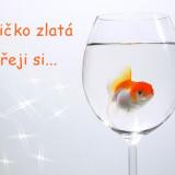 fish-5958291_960_720