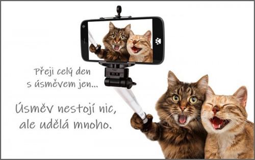 cats-5966028_960_720.jpg