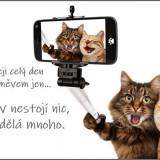 cats-5966028_960_720