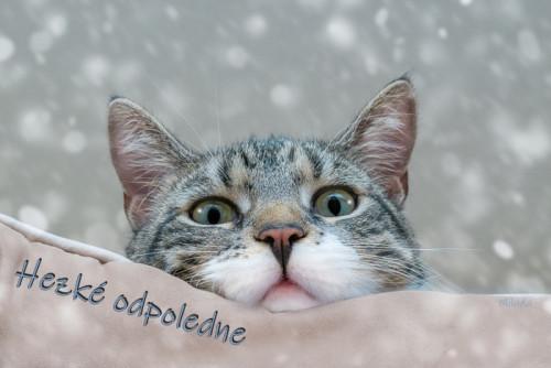 cat-5845009_960_720.jpg
