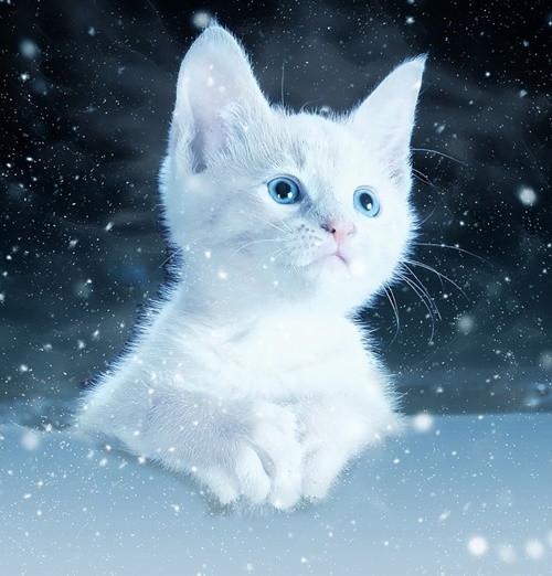 cat-2178155_960_720.jpg