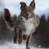dog-5773397_960_720