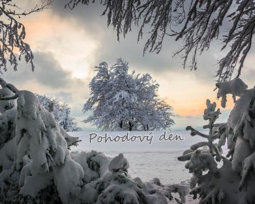 tree-3640131_960_720.jpg