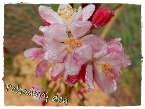 beauty-1697693_960_720.jpg