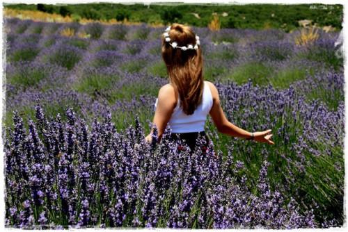 lavender-3573873_960_720.jpg